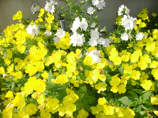 fleurs_bureau 1