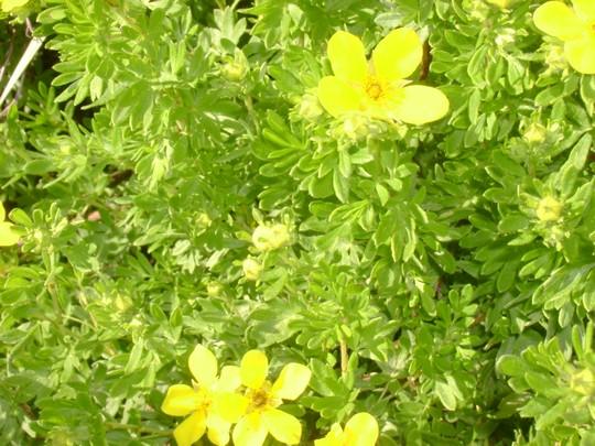fleurs_bureau 2