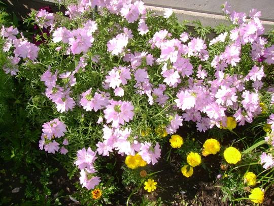 fleurs_bureau 3