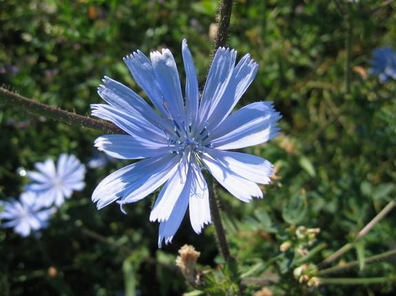 fleurbleuededenise