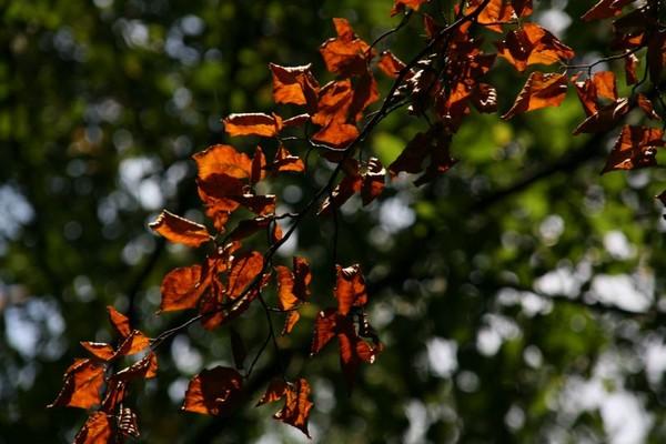 automne_brux