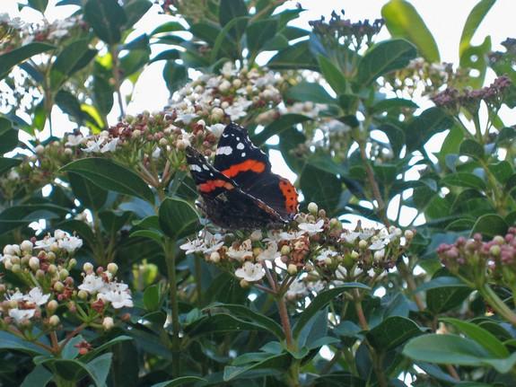 papillondegeneve