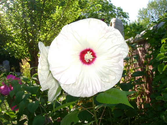 jardinbotanique5