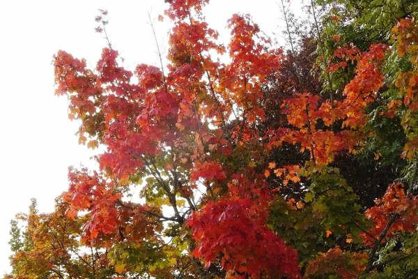 automne_g3