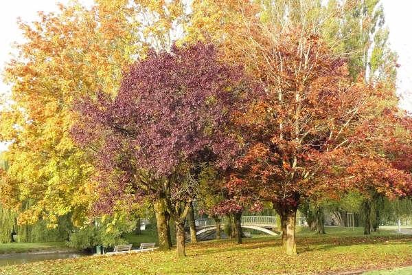 automne_g1