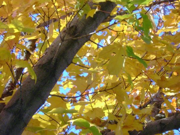 arbre du matin 2