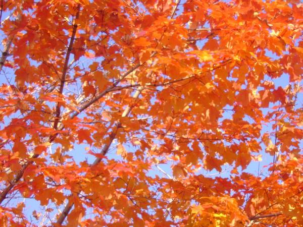 arbre du matin 3