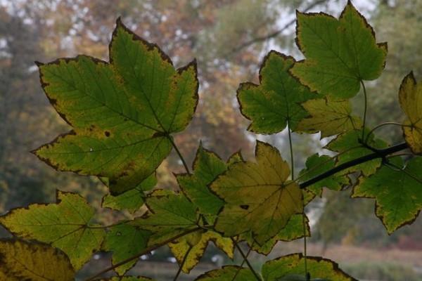 automne_044