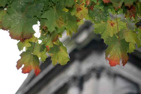 lali_automne_img_0069.jpg