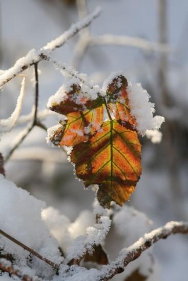 lali-neige-c-img_0159.jpg