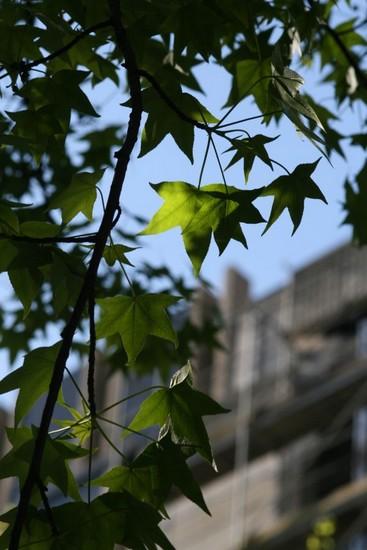 comme-un-arbre-dans-la-ville-img_0158.jpg