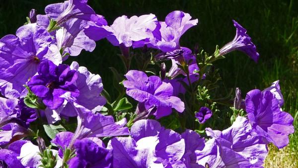 fleurs-jardin_a.jpg