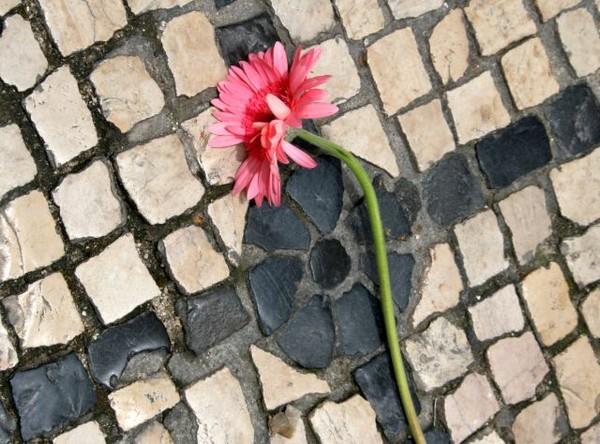 ne-marchait-pas-sur-les-fleurs.jpg