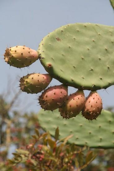 cactus-lali-img_0043.jpg