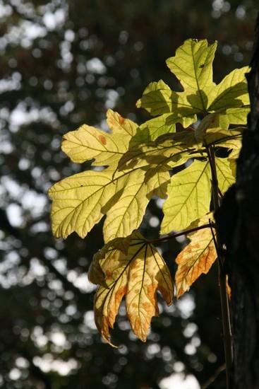 automne-au-pre-lachaise-img_0243.jpg