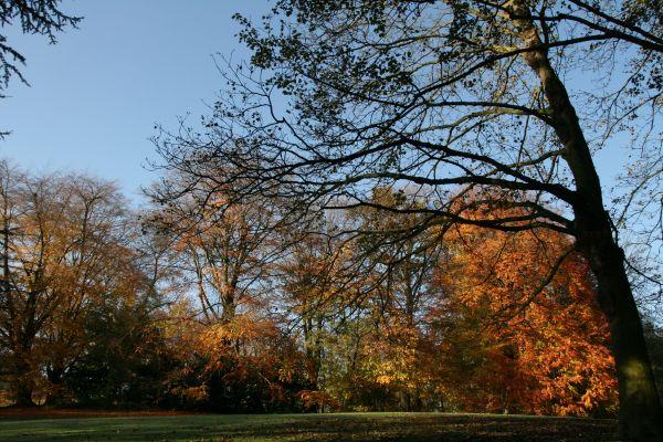 automne-lali-trois-img_0165.jpg