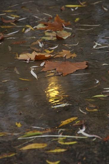 lagonie-des-feuilles-bruxelles-divers_0114_.jpg