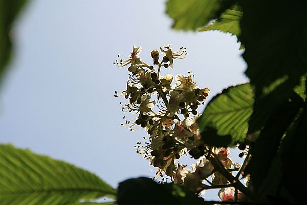 reve-de-printemps-img_0189.jpg