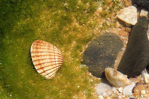 cadeau-darmando-2010-05-31_0131-armacao-praia.jpg