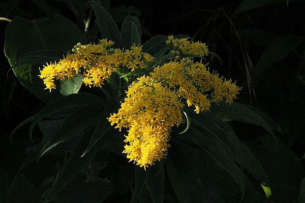 lalai-jaune-2010-08-09-_canon-7d-tamron-_1038.jpg
