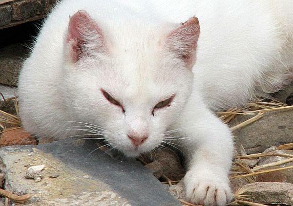 un-chat-pour-lali.jpg