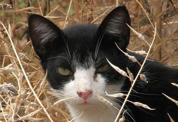 un-chat-pour-lali2.jpg
