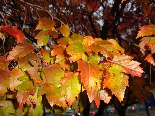photo-156_sous-la-pluie.jpg