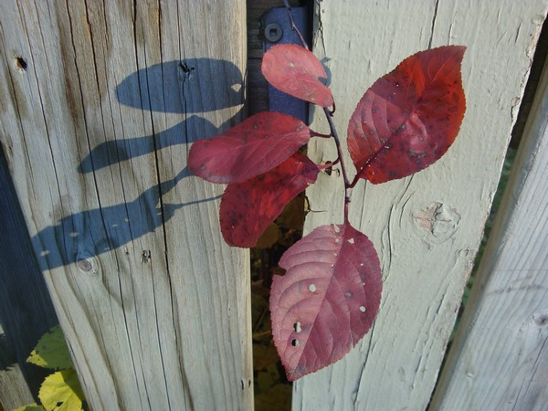 photo-164_cloture.jpg
