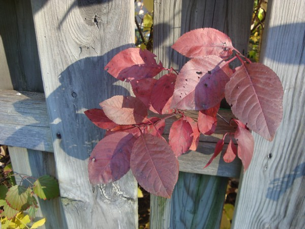 photo-167_cloture.jpg