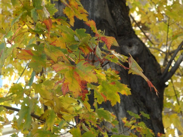 photo-172_automne.jpg
