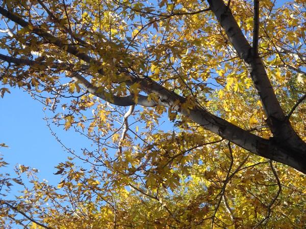 photo-176_automne.jpg