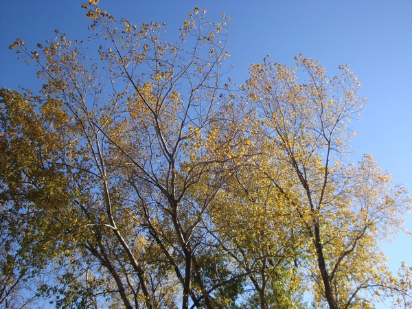 photo-189_automne.jpg