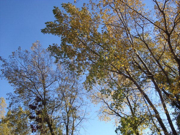 photo-191_automne.jpg