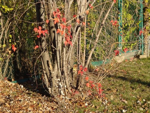 photo-238_automne.jpg