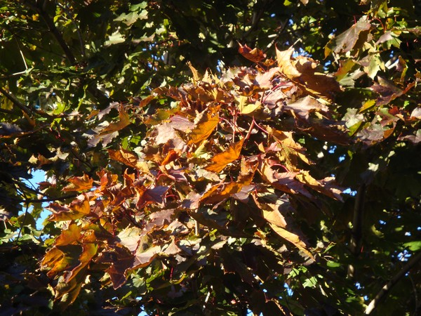 photo-247_automne.jpg