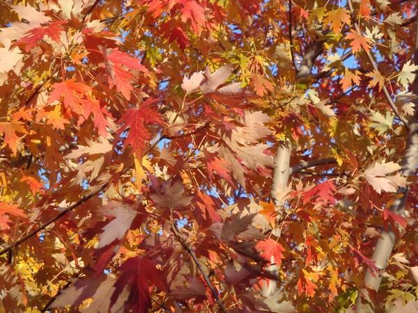 photo-264_automne.jpg