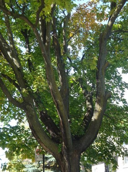 photo-404_arbre.jpg