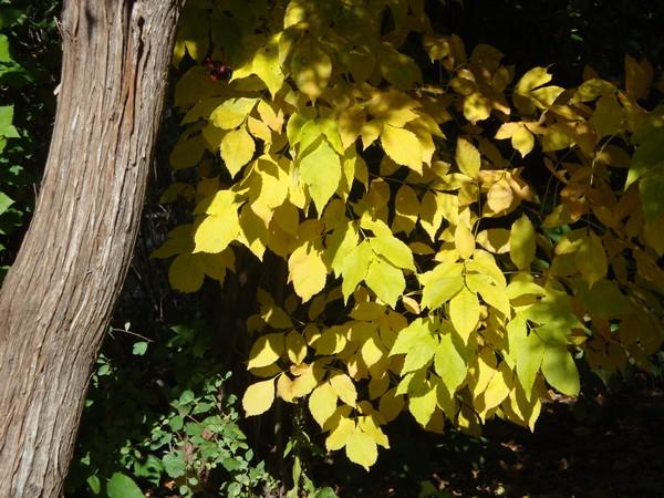 photo-418_automne.jpg