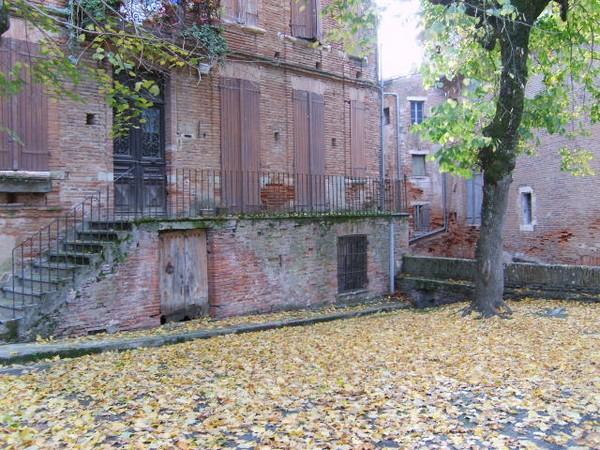 le-tapis-de-feuilles.JPG