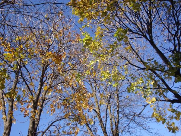 photo-010_novembre.jpg