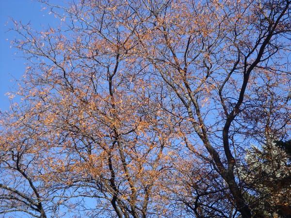 photo-013_novembre.jpg
