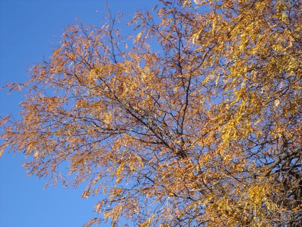 photo-016_novembre.jpg