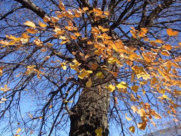 photo-017_novembre.jpg