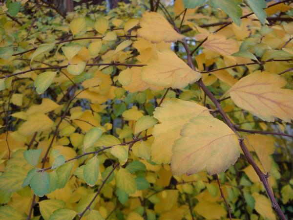 photo-048_novembre.jpg