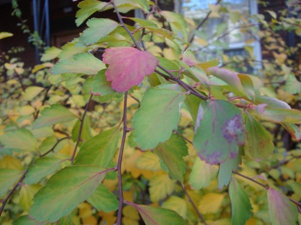 photo-050_novembre.jpg