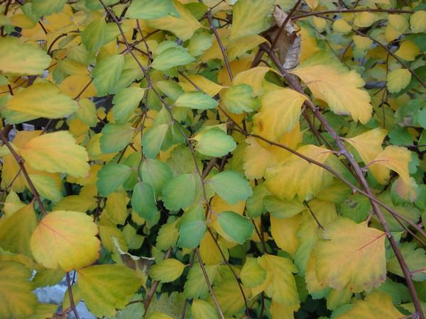 photo-051_novembre.jpg