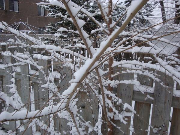 photo-078_neige.jpg