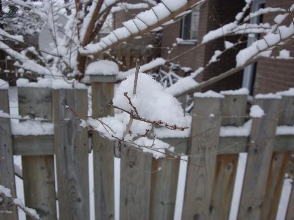 photo-080_neige.jpg