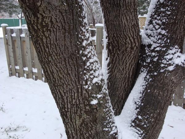photo-085_neige.jpg