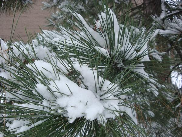 photo-087_neige.jpg